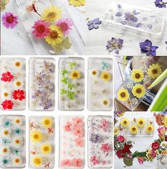 Cute Pressed Real Handmade Dry Flower Bling Hard Skin Case Cover For iPhone 5 5S