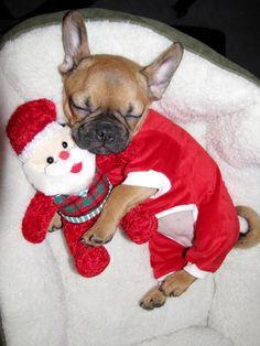 'Santa's Little Christmas Day Helper', French Bulldog Puppy.