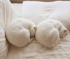 White Heaven, I Love Cats, Vintage Patterns, Bean Bag Chair, Dance Shoes, Cottage, Gatos, Cat Breeds, Dancing Shoes
