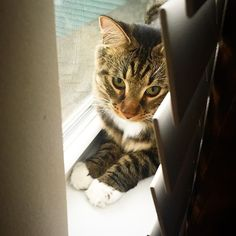 You know you love him #cat #tigeytheadventuretiger #hashtag