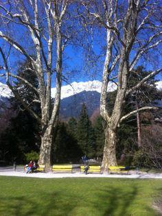 Zwei Riesenplatanen im #Hofgarten #Innsbruck Innsbruck, Parks, Golf Courses, Sidewalk, Gardens, Beach, Life, Paisajes, Traveling