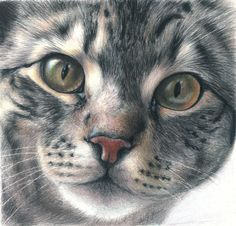 colored pencil animals - tiger cat - by Andrea Gianchiglia (Animal Portraiture and Illustration) - this site has several nice color pencil animal portraits Cat Drawing, Painting & Drawing, Painting Wallpaper, Sketch Drawing, Animal Drawings, Pencil Drawings, Cat Embroidery, Color Pencil Art, Grey Cats