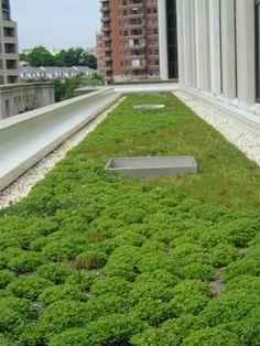 Techos Verdes, excelente opción para ayudar al Medio Ambiente y gastar muy poco en climatización