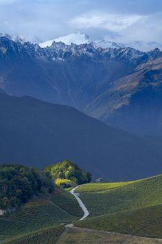 vineyards on the hillside above Saillon, La Valais region, Switzerland | David Noton Photography