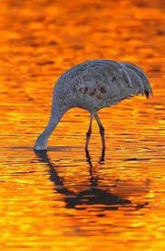 Image result for bird photography