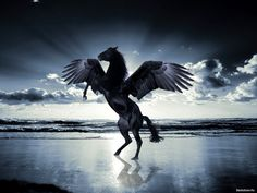 conceptual art of black dog war horse | HQ wallpaper Black horse with wings, 1280 x 1024 on the desktop, high ...