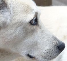 How To Cure My Dog's Cold - 9 steps - OneHowto