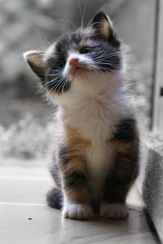 Another kitten doing a fine display on #whiskerswednesday !