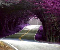 Carretera.....