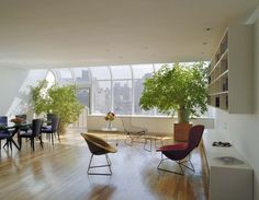 Modern Home indoor plants Design Ideas, Pictures, Remodel and Decor
