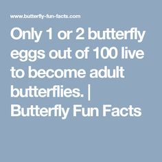 Only 1 or 2 butterfly eggs out of 100 live to become adult butterflies. | Butterfly Fun Facts