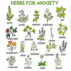 Tremendous Herb Gardening The Many Good Things About It Ideas Gardening Herbs The Green Witch on Magic Herbs, Herbal Magic, Herbal Witch, Plant Magic, Wicca Herbs, Herbs For Anxiety, Anxiety Help, Green Witchcraft, Witchcraft Herbs