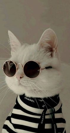 39 Cute Cat Wallpaper for Cat People – Page 8 Cute Baby Cats, Cute Little Animals, Cute Cats And Kittens, Cute Funny Animals, Cool Cats, Kittens Cutest, Cute Dogs, Cute Babies, Ragdoll Kittens