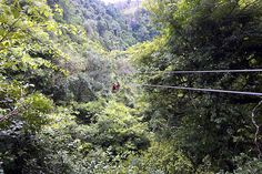 Try out Tarzan like adventure at Karkloof canopy tour (view pics) Deep Forest, One Tree, Lifestyle News, Tarzan, Book Series, Canopy, South Africa, Tours, Adventure