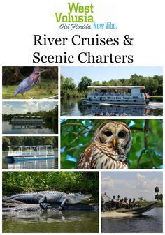River Cruises and Scenic Charters are a great way to discover Real Florida along the St. Johns River.  Whether you like the slow moving and relaxing pontoon boats, or you prefer the speed of an airboat ride, there is something for everyone.  Either way, getting out on the water and seeing the local wildlife and natural beauty of the area is a gift you should give yourself and your family.