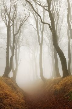 vurtual:  Autumn - Ore mountains III (by Daniel Řeřicha)