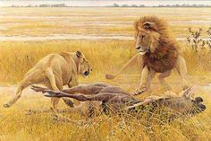 Art Country Canada -ROBERT BATEMAN Dispute Over Prey Lions Offset limited edition print