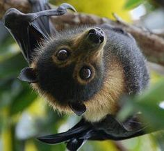Look at this picture and then try to tell me I'm crazy for calling bats cute