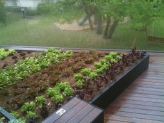 Edible Roof Vegetable Garden By Bercy Chen Studio Lp Via Flickr Backyard Farming Rooftop