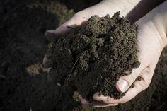 Soil. Nature's anti-depressant?
