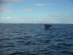 Grey whale encounters in an undeveloped, peaceful lagoon - Review of Baja Ecotours, San Ignacio, Mexico - TripAdvisor