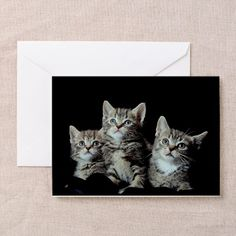 Aw, look at those kittens staring up at...? - Gift Ideas For Cat Lovers (CafePress.com)