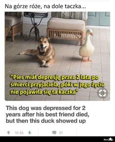 BESTY.pl Very Funny Memes, Wtf Funny, Hilarious, Weekend Humor, Good Mood, Best Memes, Nice View, Fun Facts, Haha