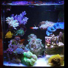 Coral Reef Aquarium, Nano Aquarium, Aquarium Fish, Saltwater Tank, Saltwater Aquarium, Planted Aquarium, Marine Fish Tanks, Marine Tank, Art Pics