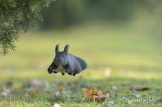 flying squirrel von vienna wildlife