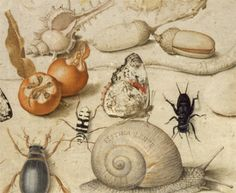 Joris Hoefnagel, Flemish (1542–1600), Emblematic Miniature with Insects, Acorns, Fruit, and Shells, and a Snail (detail), miniature. Image: Unidentified photographer, courtesy Melvin R. Seiden