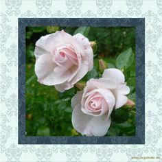 ♥Blumen / Flowers♥ ♥darf geteilt werden♥