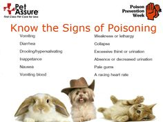 If your pet is exhibiting any of these signs, call your vet. Plus, click through to comment on our Facebook post for a chance to win a free Pet Assure membership!