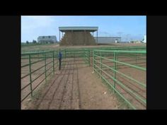 BQA Facility Design - Permanent Handling Systems for Large Operations Cattle Barn, Cattle Ranch, Ag Science, Animal Science, Cattle Farming, Livestock, Funny Cows, Cattle Corrals, Temple Grandin