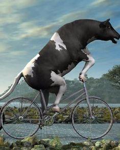 Ha..Ha..Ha..Ha..Ha..! #bicyclehumor