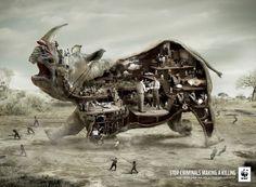 WWF: Rhino