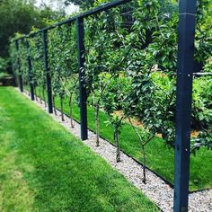 A vegetable garden surrounded by espalier is super cool. This lovely was found just outside #boston. -- #massachusetts #garden #gardening #apld #espalier #landscapedesign #vegetablegarden