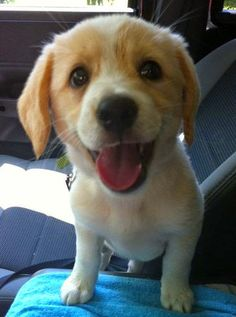 I Love all Dog Breeds: 5 cutest smiling puppy faces you have ever seen