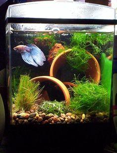 Fish tank ideas- clay pots