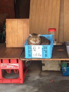 #animal #cat