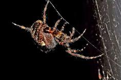 Web Spinning   Flickr - Photo Sharing!