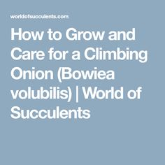 How to Grow and Care for a Climbing Onion (Bowiea volubilis) | World of Succulents