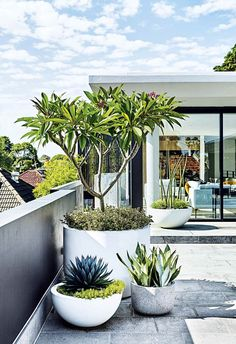 Garden Design Modern planting and sharp lines give this rooftop terrace and garden a contemporary appeal. - Modern planting and sharp lines give this rooftop terrace and garden a contemporary appeal. Outdoor Plants, Outdoor Gardens, Rooftop Gardens, Balcony Plants, Plants In Pots, Balcony Gardening, Trees In Pots, Potted Trees Patio, Potted Plants Patio