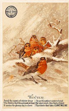 -CatnipStudioCollage-: Free Vintage Clip Art - Winter Robins