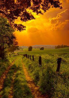 Que hoje a felicidade de viver contagie todos os seus momentos. Bom dia!