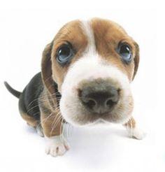 The Dog - Artlist Collection - making a comeback after over 10 years!!!  #jenerositymktg