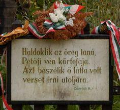 5. Petőfi Sándor utolsó éjszakája Székelykeresztúron. Ismerkedj meg az öreg körte fával!
