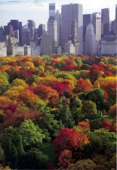 NYC. Central Park on fall. Autumn at its best