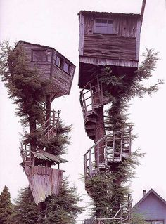 Tree House Neighbours | I don't know what you think of these, but you get in the trouble of doing a #treehouse and then you ruin the view with another treehouse on the same level...