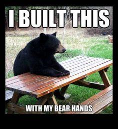 funny photos, bear at picnic table, bear hands