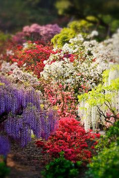Many flowers blooming in profusion, Ashikaga Flower Park, Tochigi, Japan